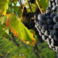 L'intérêt de réaliser un audit avant d'acheter un vignoble